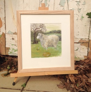 Heligan Longwool sheep